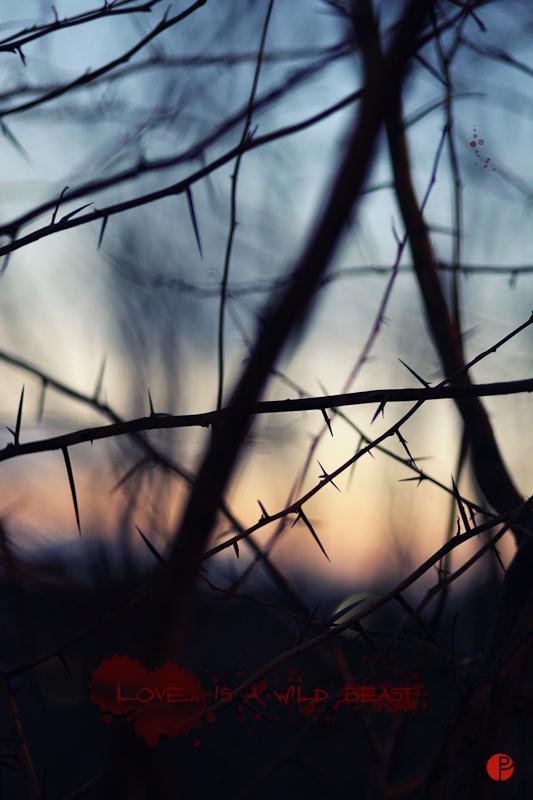 foto oradea - fehephotography - blasko szabolcs
